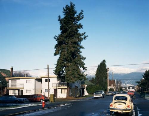 jeff_wall_pine_on_the_corner2