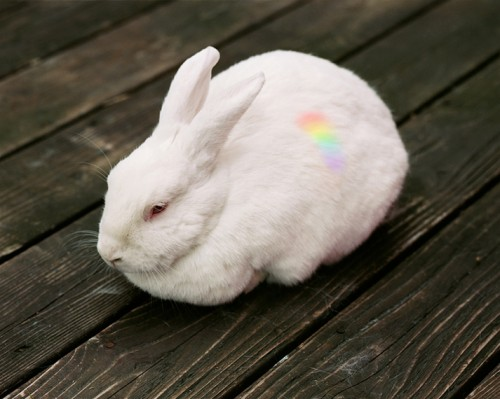 hannah witaker-rabbit