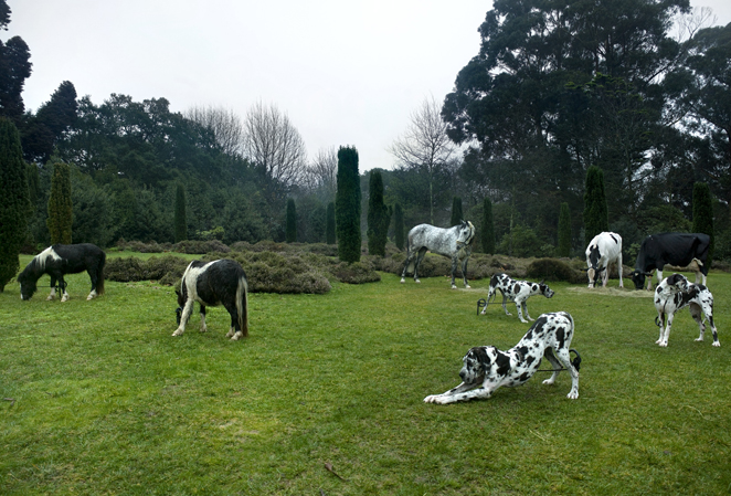 Tableau vivant black and white animals BH 09
