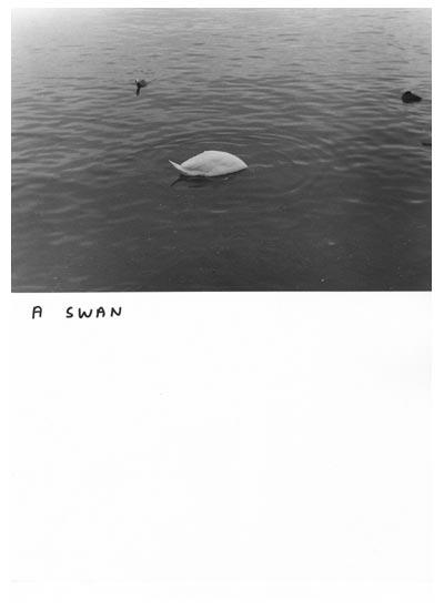 shrigley-a_swan