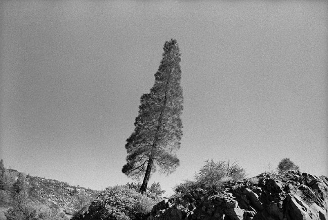 Shannon Ebner, Leaning Tree 2002