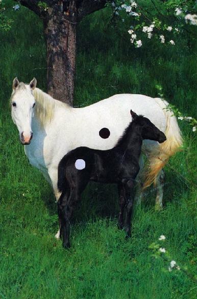 eva-fiore kovacosky - horses