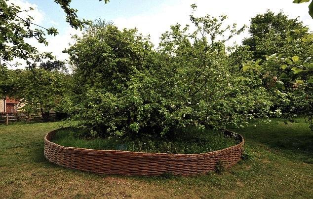 newton tree