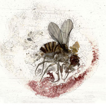 sarabjarland_Flies, 2007-2