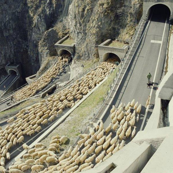 San Boldo Pass in the Italian Alps which experiences regular sheep jams, as the sheep are herded through the 5 mountain tunnels
